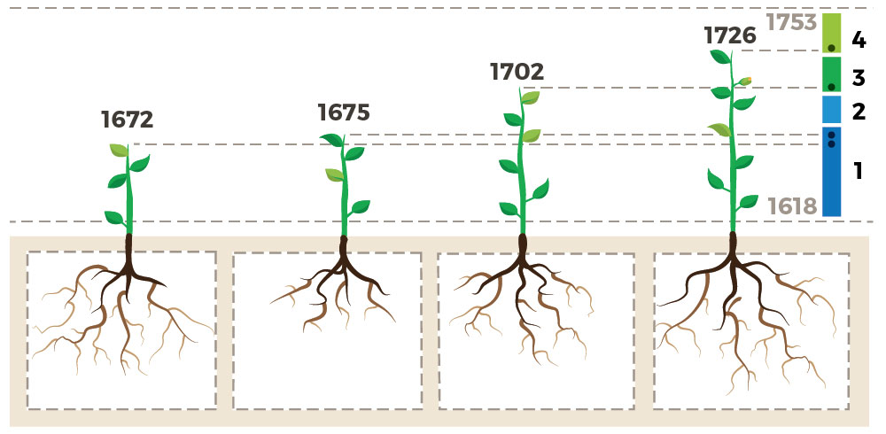 4 plants arranged left to right with increasing levels of vertical growth, denoted as increasing achievement scores. Below ground, root size varies, showing that achievement data does not directly correlate to student growth and is not an accurate predictor of student learning